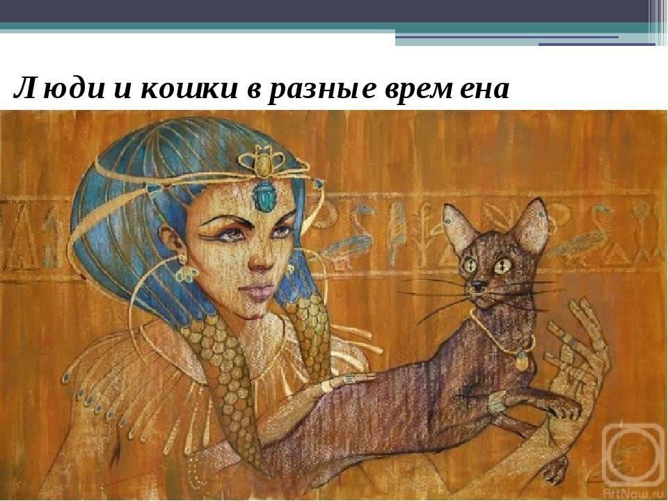 Магия кошек, их краткая история и реинкарнация - метаисскра