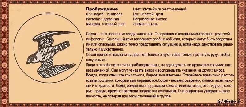 Славянский гороскоп животных по дате рождения - по месяцам и по годам   s-zametki.ru   яндекс дзен