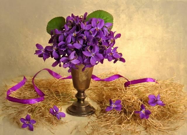Фиалка: приметы и суеверия, значение цветка, можно ли выращивать фиалки дома : labuda.blog фиалка: приметы и суеверия, значение цветка, можно ли выращивать фиалки дома — «лабуда» информационно-развлекательный интернет журнал