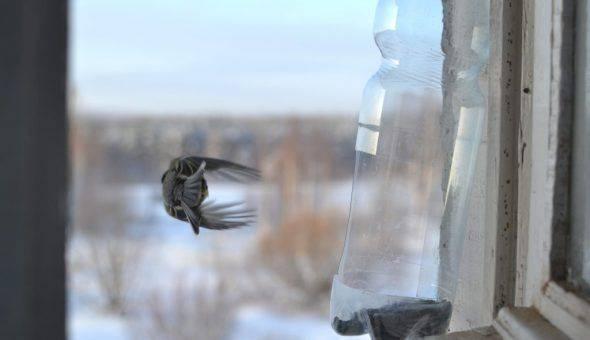 Примета: птица залетела в дом