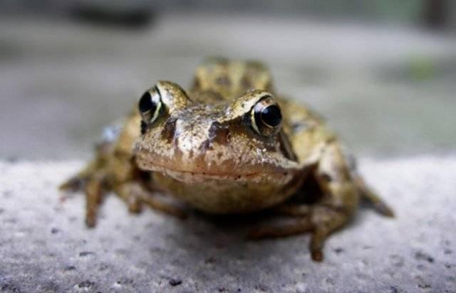 Примета: увидеть лягушку на дороге, пороге дома, могиле