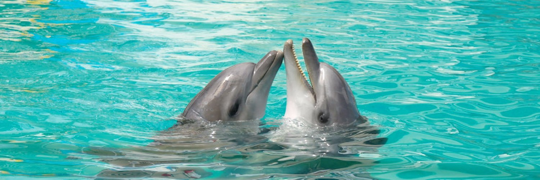 «сонник дельфин приснился, к чему снится во сне дельфин»