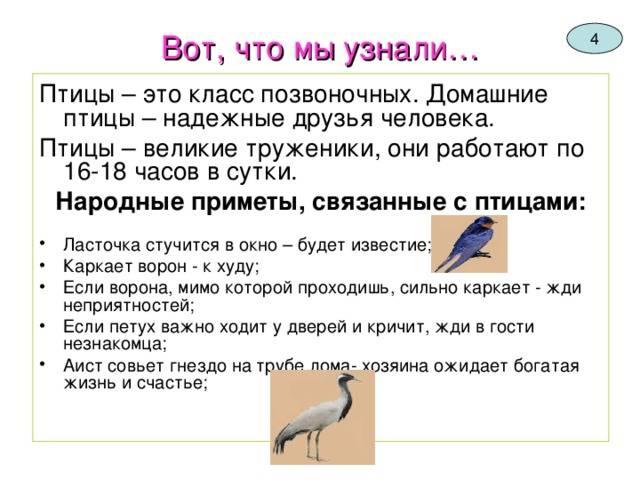 Приметы про птиц в различных ситуациях