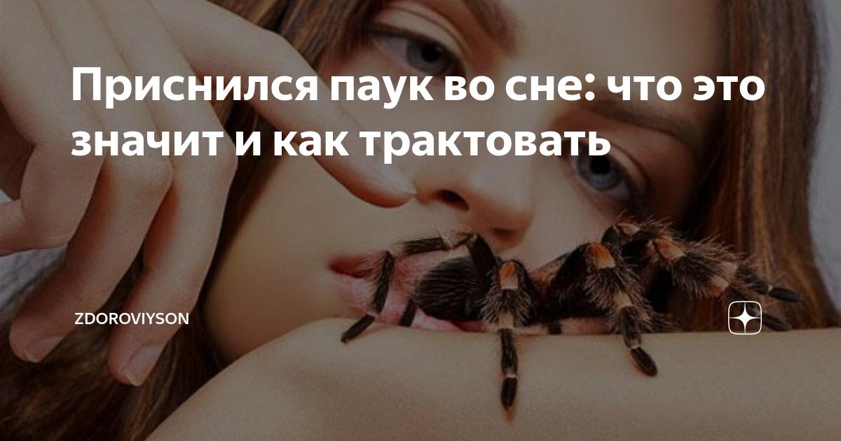 Сонник сеть паука. к чему снится сеть паука видеть во сне - сонник дома солнца