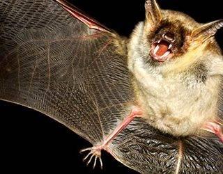 К чему снятся летучие мыши во сне: что это значит, черные, белые, серые, в доме, много, нападают