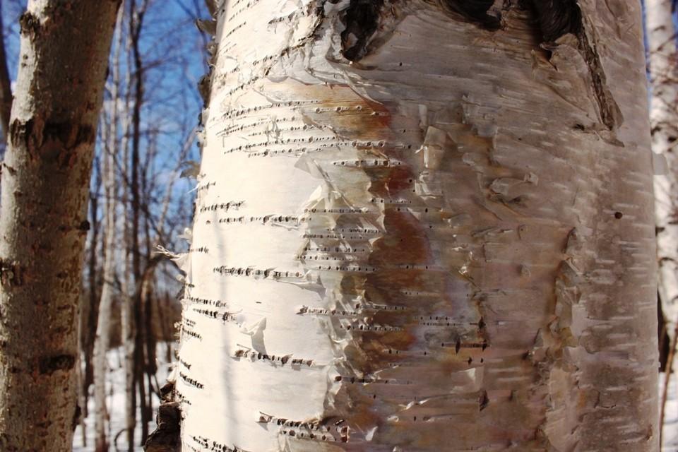 Народные приметы на весну. весенние пословицы и поговорки