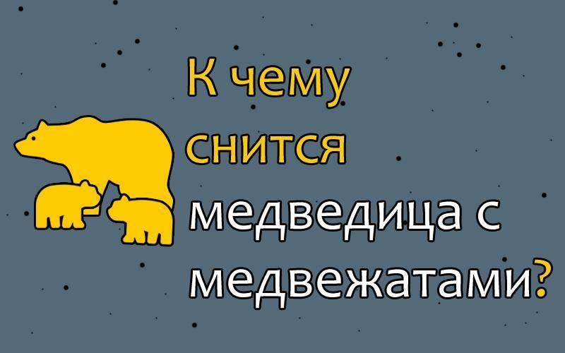 К чему снится ???? медведь во сне — по 90 сонникам! если видишь во сне медведь что значит?