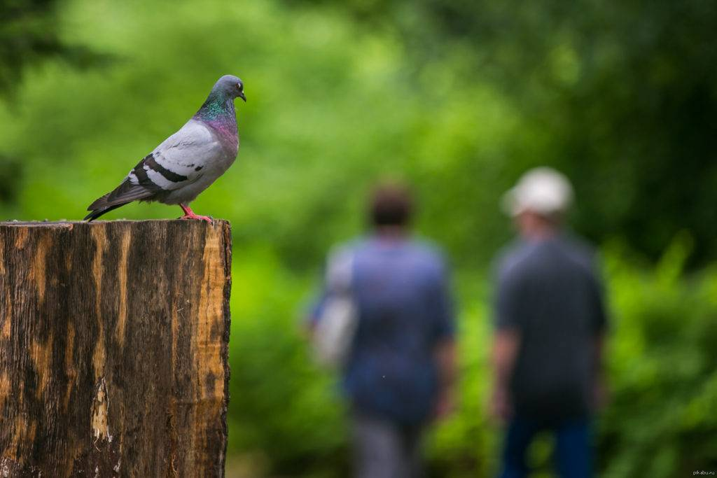 Примета, если птица накакала на человека - к добру