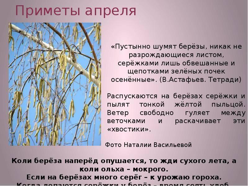 Народные приметы про апрель месяц на каждый день