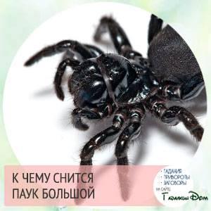 Сонник паук помог мне. к чему снится паук помог мне видеть во сне - сонник дома солнца