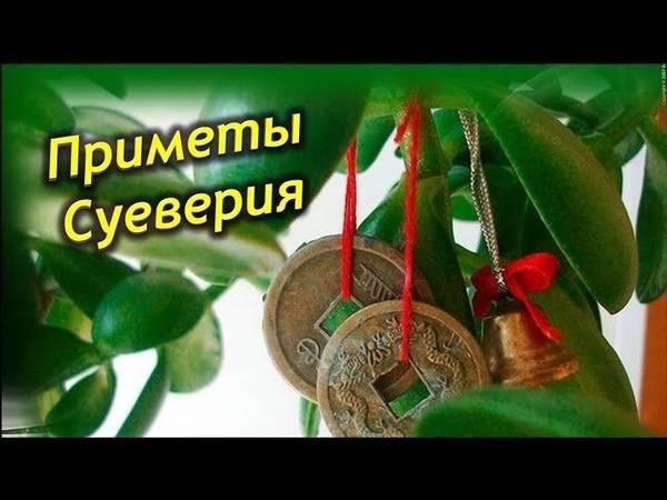 Приметы про деньги: денежные суеверия, очень действенные народные обряды и правила сохранения денег