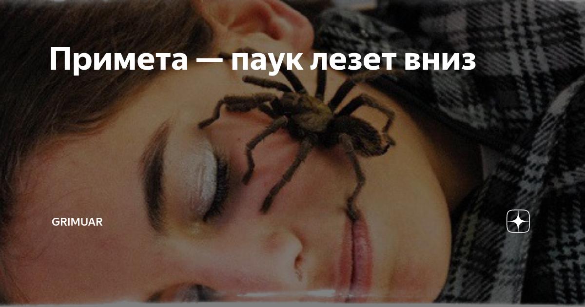 Приметы, если паук ползет вверх по стене или поднимается по паутине