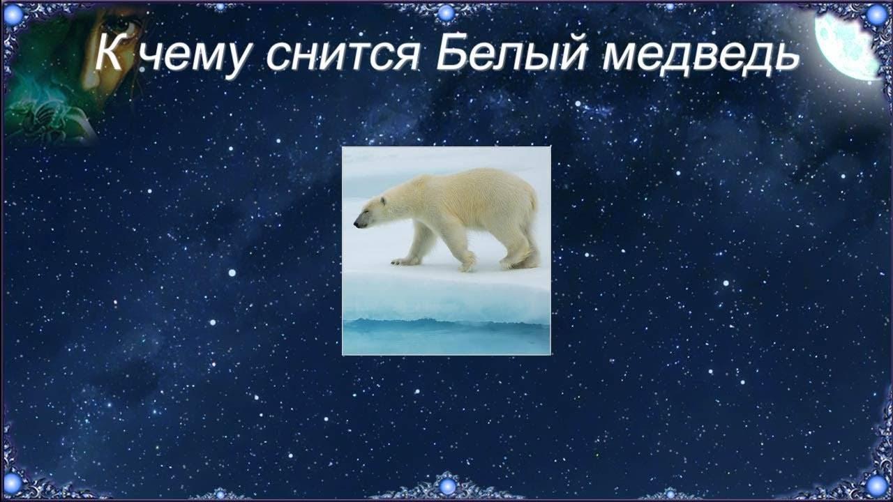 Сонник медведь к чему ???? снится, приснился медведь во сне?