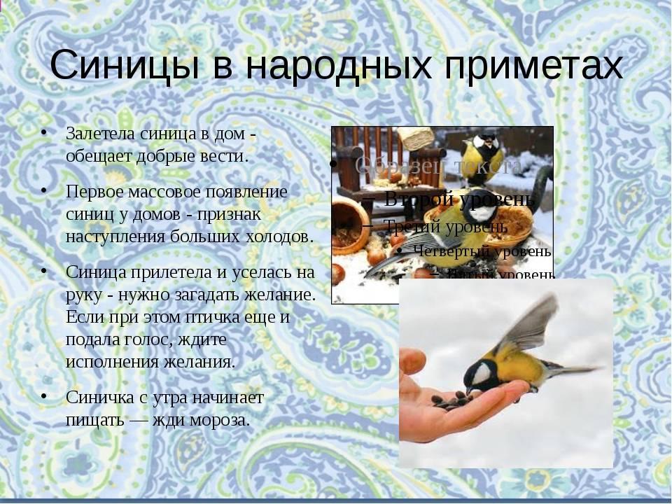 Птица села наголову: примета