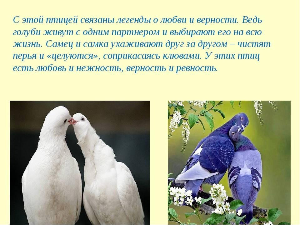К чему по приметам голубь стучит в окно