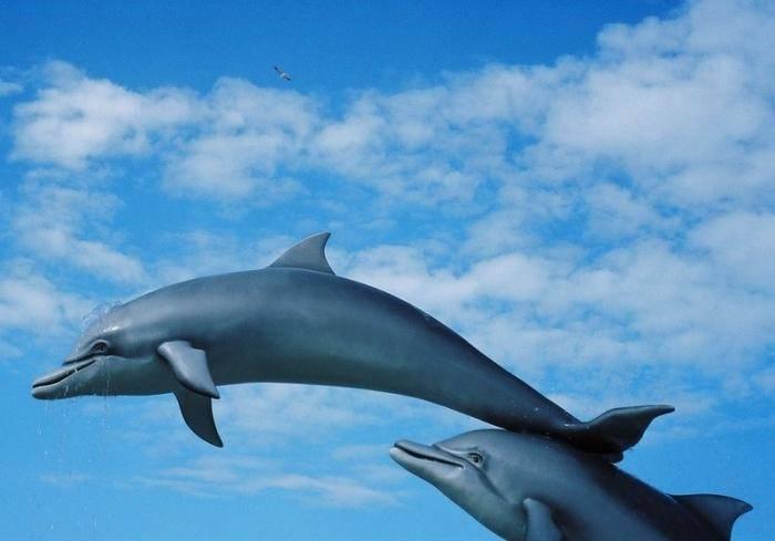 Сонник дельфин | гороскопы 365