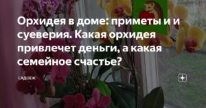 Почему нельзя держать дома орхидеи: народные приметы, объективные причины