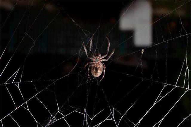 Примета - паук ползет по человеку