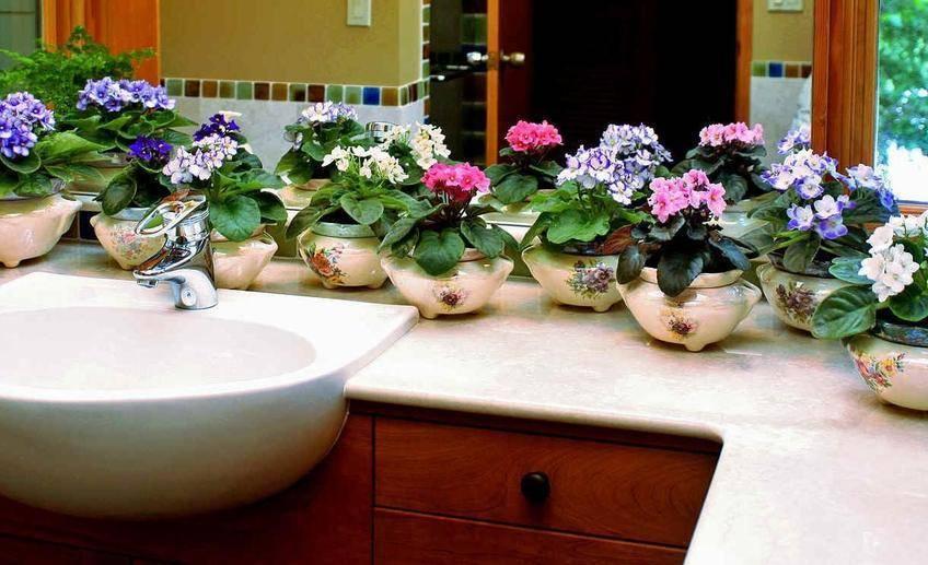 Правда ли фиалки на подоконнике разрушают личную жизнь: приметы и суеверия об этих цветах в доме
