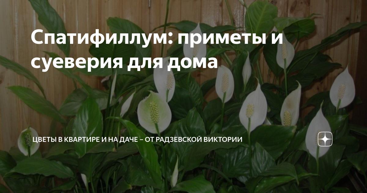 Кротон: приметы и суеверия о полезном растении