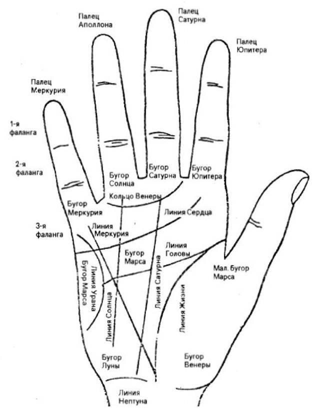 Линии на руке и их значение в хиромантии: расшифровка и толкование, гадание для начинающих ???? хиромантия