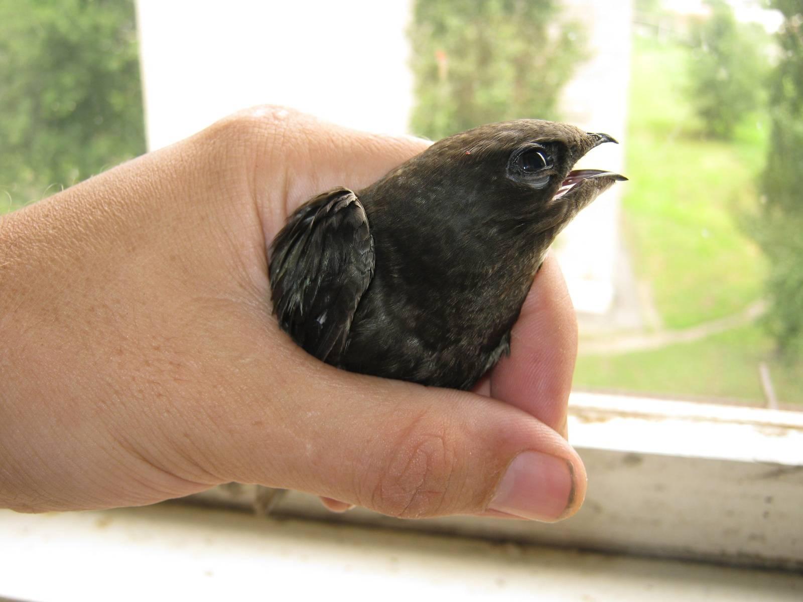 Птица залетела в дом – примета, положительное и негативное значение | саратовбизнесконсалтинг