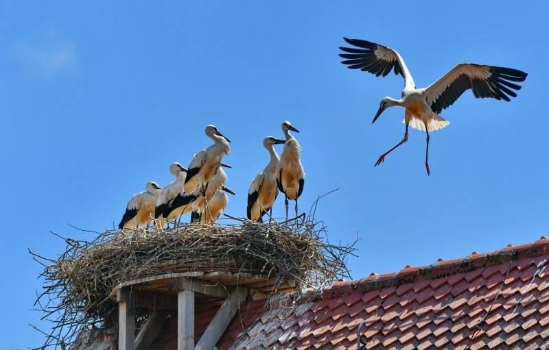 Увидеть аиста: на крыше, в небе, на дороге – значение приметы