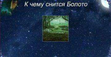 Сонник упасть в болото и выбраться. к чему снится упасть в болото и выбраться видеть во сне - сонник дома солнца