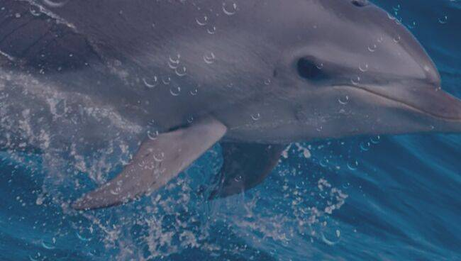 Сонник лед и дельфины. к чему снится лед и дельфины видеть во сне - сонник дома солнца