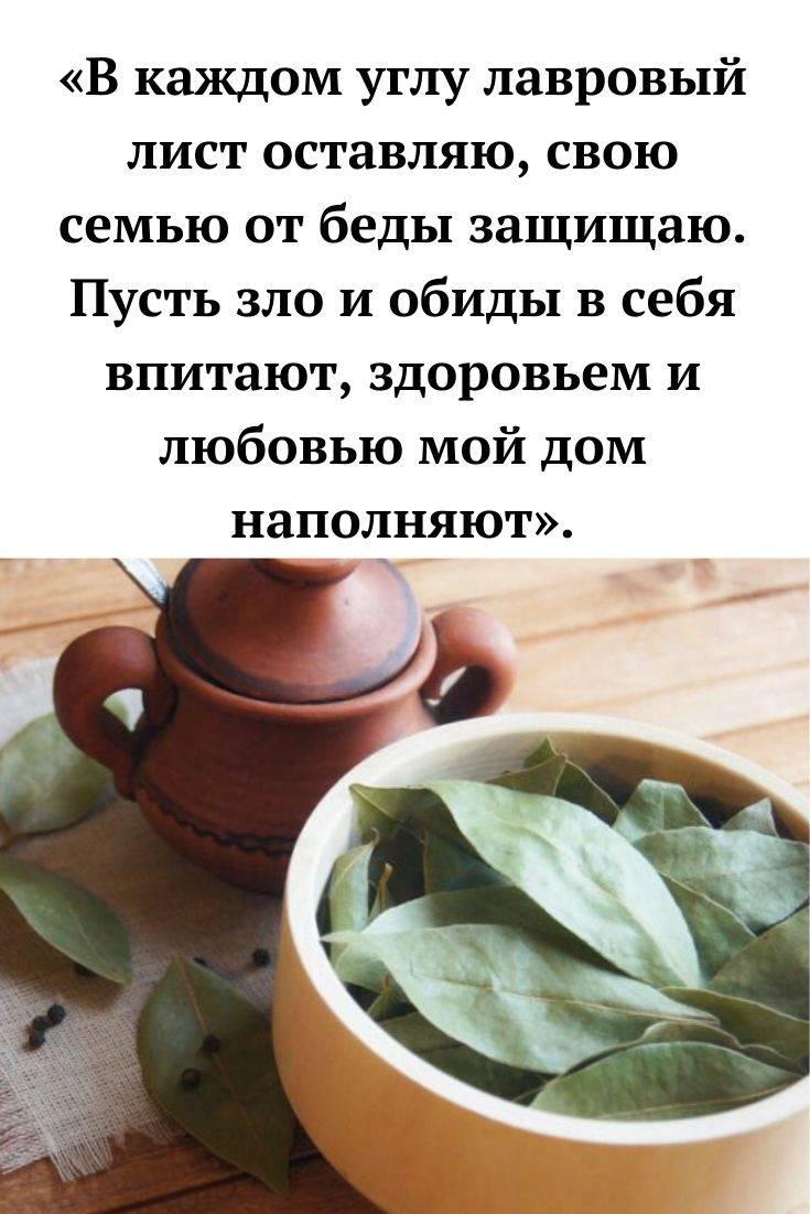 Рабочие заговоры на лавровый лист для привлечения любви, денег и здоровья - sunami.ru