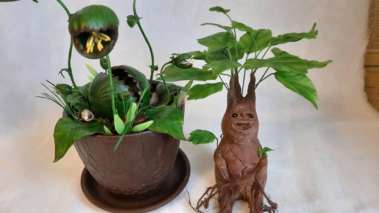 Магическая трава: мандрагора   адамова голова