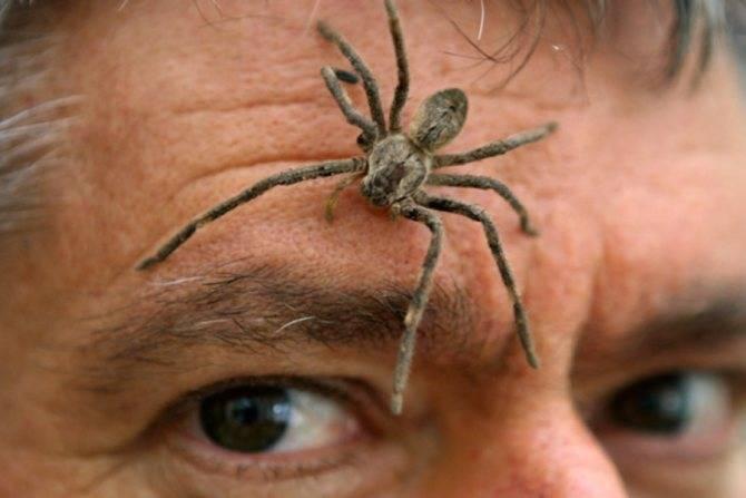 Видеть наяву паука: к чему эта встреча, народные приметы и суеверия - tolksnov.ru