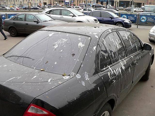 Примета если птица накакала на голову, машину, окно
