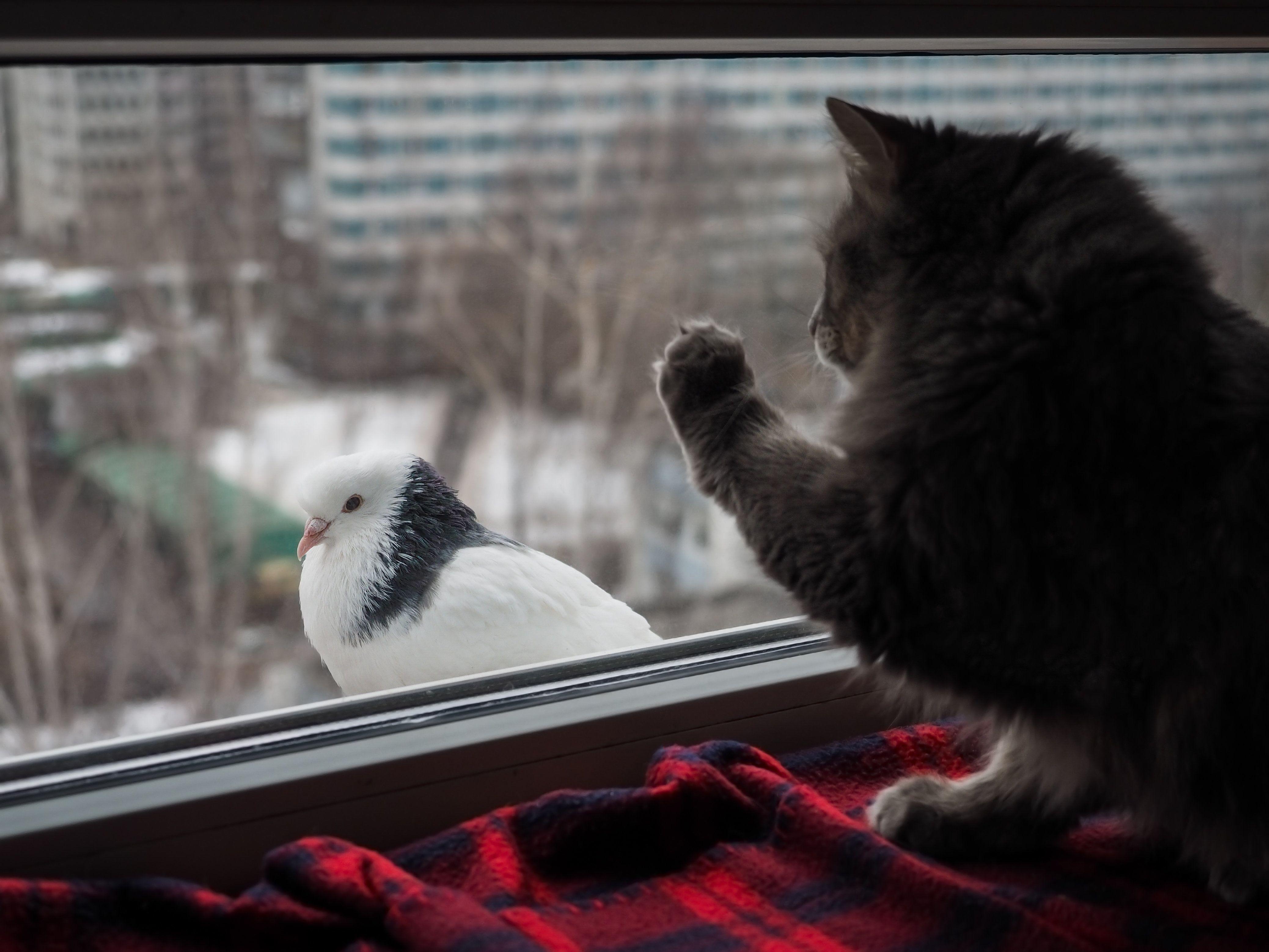 Голубь сел на подоконник за окном: примета, к чему прилетел и смотрит с улицы