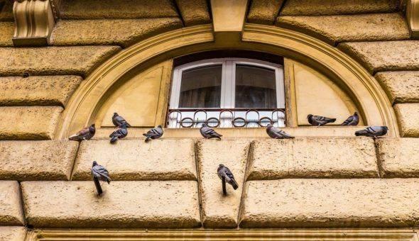 Птица ударилась в окно и улетела. чего ждать