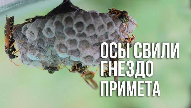 Примета: муравьи в доме (завелись в квартире)