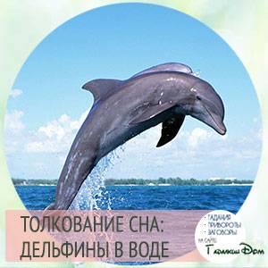 К чему снится дельфин женщине
