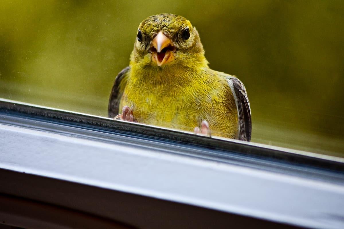 Что означает примета: птица ударилась в окно