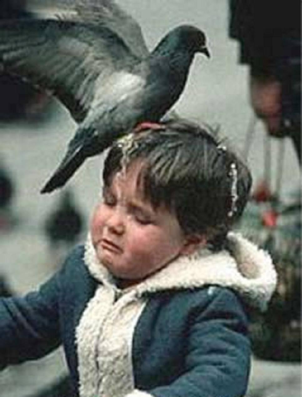 Примета если птица накакала на голову, машину, окно | бытовая магия | яндекс дзен