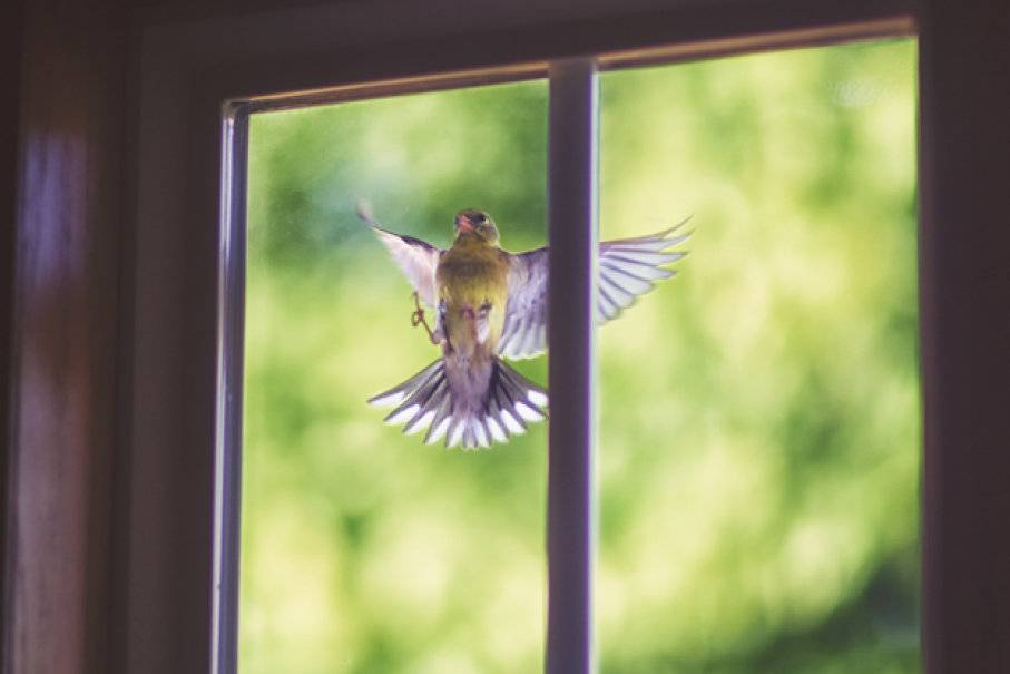 Народные приметы про воробья на окне