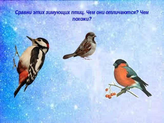 """Значение приметы """"птица села на окно"""""""