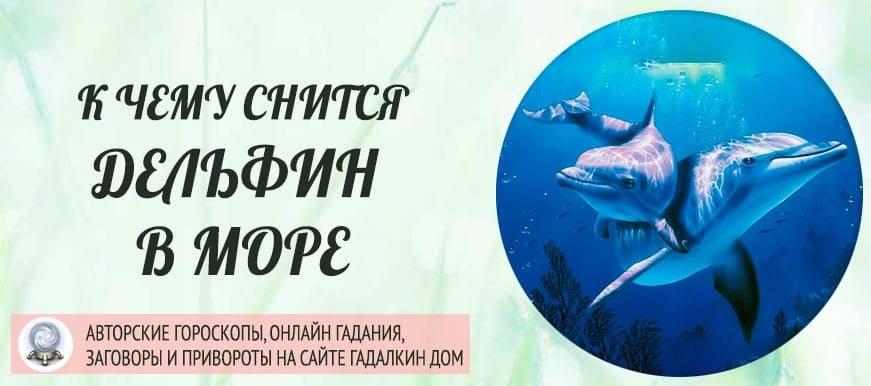 Сонник дельфин  приснился, к чему снится дельфин во сне видеть?