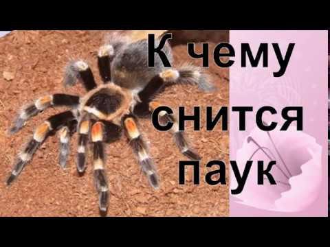 Сонник паук. к чему снится паук во сне?