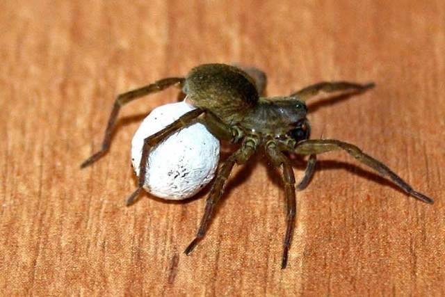 Народные приметы о пауках в доме и квартире: почему их нельзя убивать?