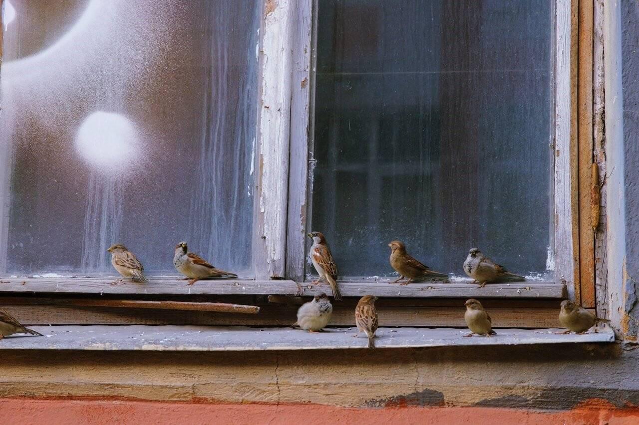 К чему птица стучится в окно: значение приметы