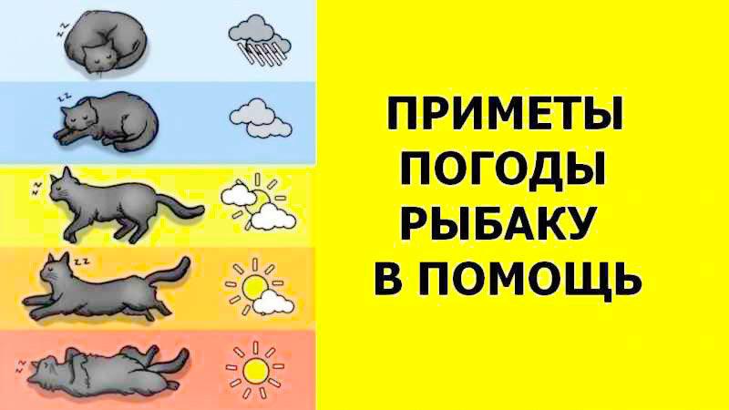 Народные приметы о весне. приметы для детей о весне и погоде