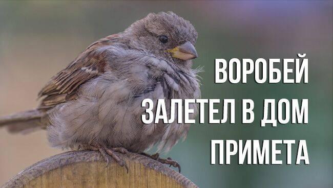 Приметы про сову: к чему увидеть, прилетела к дому или залетела в окно