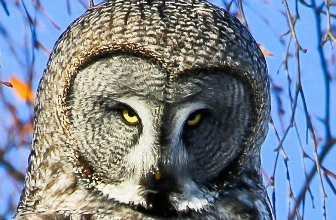 Приметы о поведении вороны: села на голову, клюнула