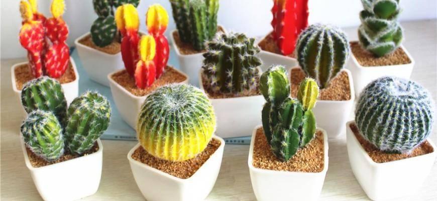 Можно ли держать дома кактусы: значение примет