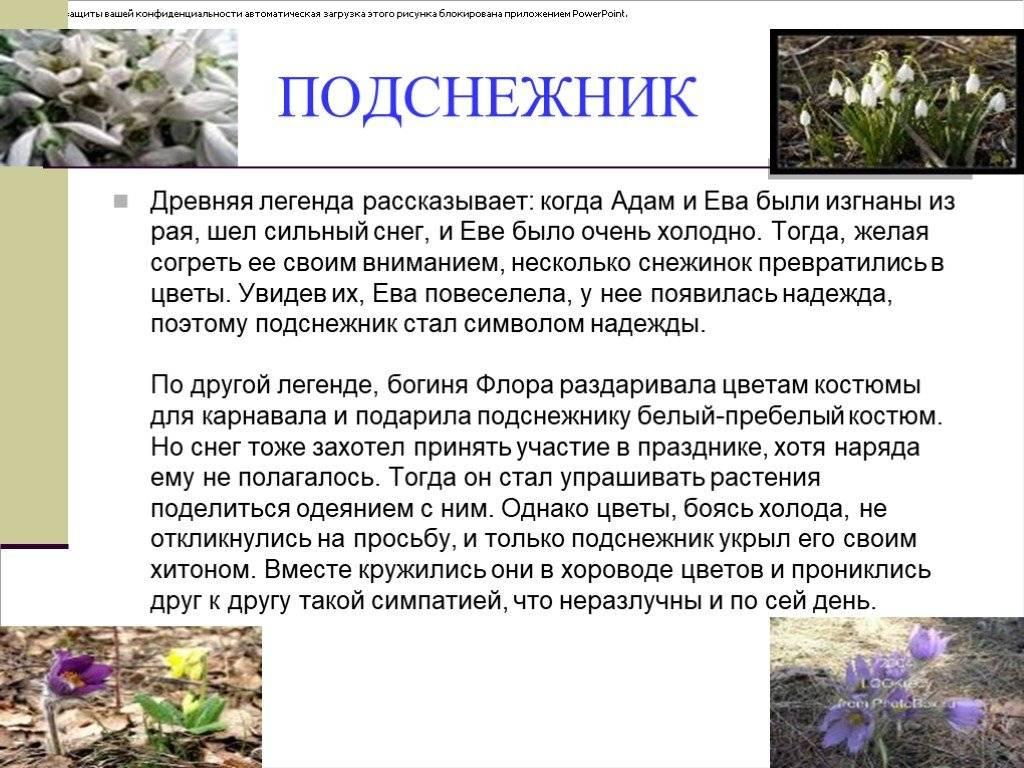 Природные символы в культуре народов россии и украины - легенды и поверья о цветах